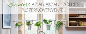 Édenkert az ablakban – Zöldíts fűszernövényekkel!