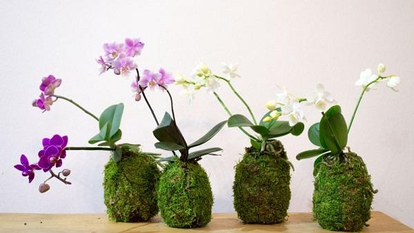 petitplanet_orchidea-kokedama