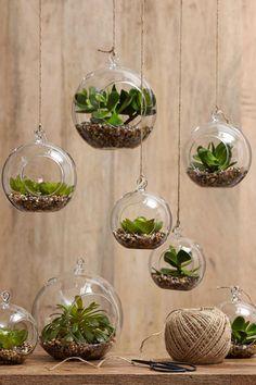 Függőkertek üvegbúrákban