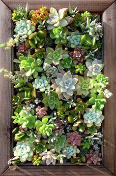 Képkeretbe foglalt növények a falon