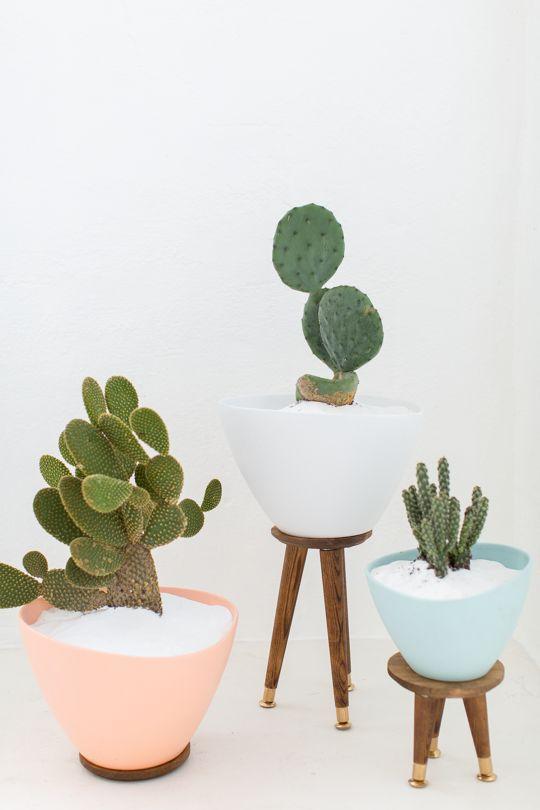 Csészébe ültetett növények