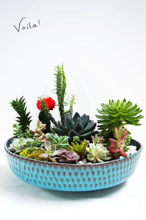 Növények lapos tálkában